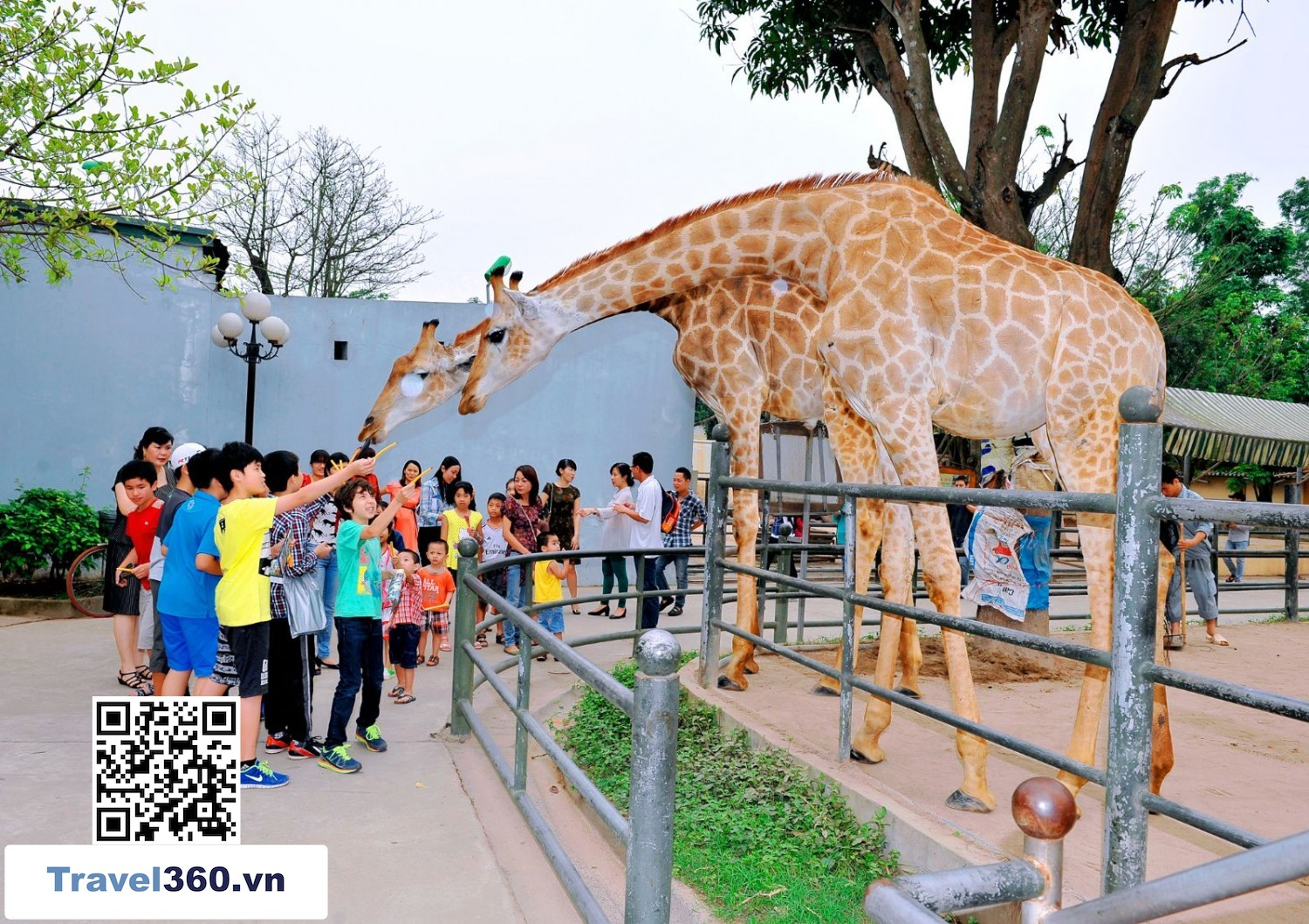 Bao Son Paradise Animals